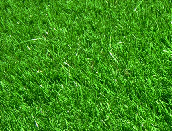 belle paquerette romana p 13g le gazon synth tique la belle pelouse artificielle pour jardin. Black Bedroom Furniture Sets. Home Design Ideas
